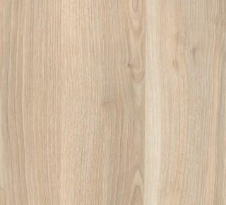 66F - Delicate Birch